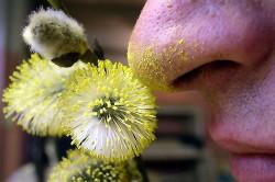 Пыльца растений как возбудитель аллергического бронхита