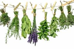 Польза лекарственных трав