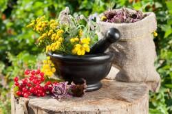 Лекарственные сборы трав для лечения бронхита