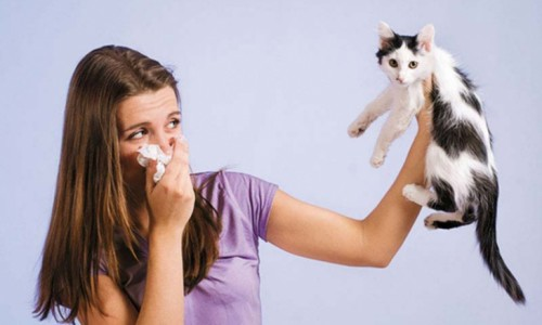 Проблема обструктивного аллергического бронхита