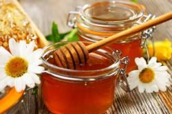 Сосновый мед для лечения грибкового бронхита